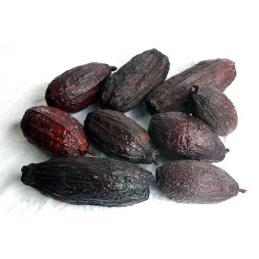 nt_480_cocoa_700a.jpg