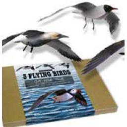 https://starbek-static.myshopblocks.com/images/tmp/nt_193_seabirds_177.jpg