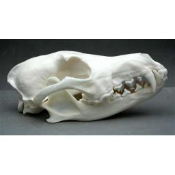 https://starbek-static.myshopblocks.com/images/tmp/nt_411_coyote650a.jpg