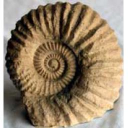 https://starbek-static.myshopblocks.com/images/tmp/fs_124_ammonite_177.jpg