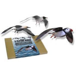 https://starbek-static.myshopblocks.com/images/tmp/nt_193_seabirds_760.jpg