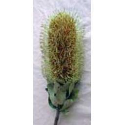 https://starbek-static.myshopblocks.com/images/tmp/nt_264_banksiaflower1.5.jpg