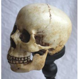 https://starbek-static.myshopblocks.com/images/tmp/nt_352_skull_550.jpg