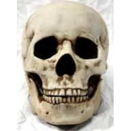 https://starbek-static.myshopblocks.com/images/tmp/nt_321_skull177.jpg