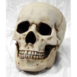 https://starbek-static.myshopblocks.com/images/tmp/nt_321_skull500a.jpg