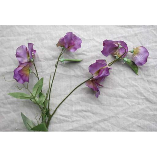 Purple Sweet Pea
