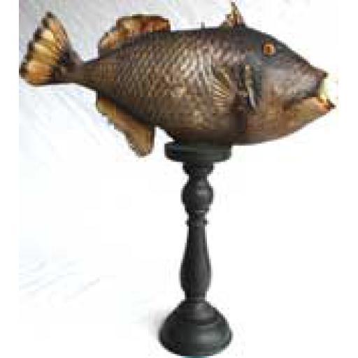 Trigger Fish on Pinth