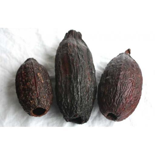 3 x Cocoa Pods