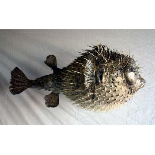 Large Porcupine Fish