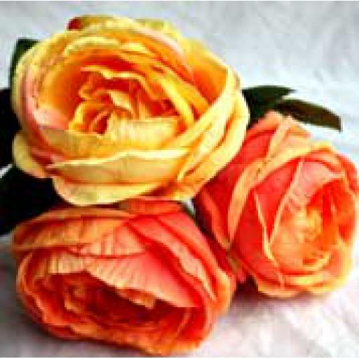 3 x Peach Cabbage Rose