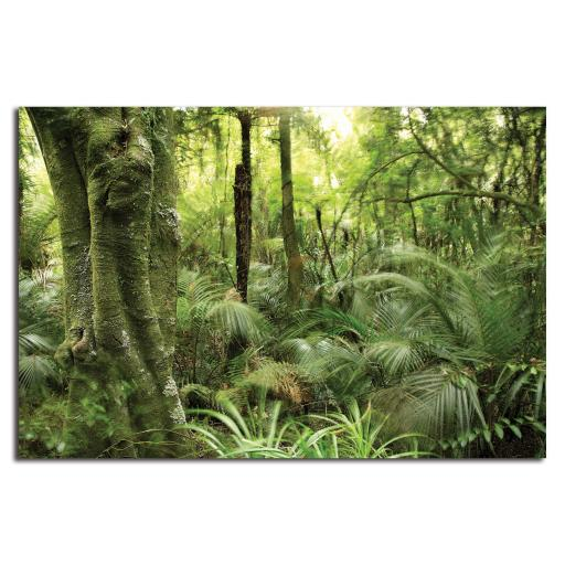 Rainforest Backdrop