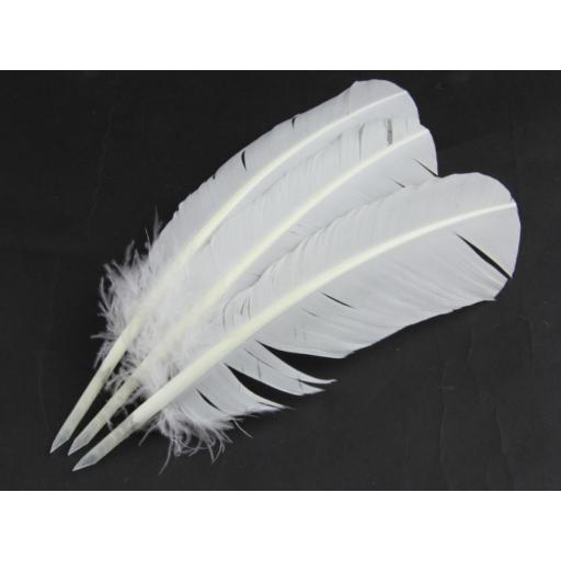 Turkey Feather Quill (Pack of 5)