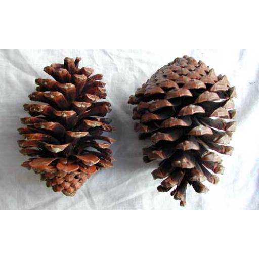 Maritime Cones
