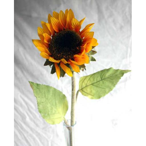 Large Sunflower