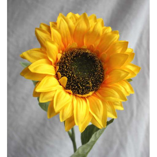 Medium Sunflower
