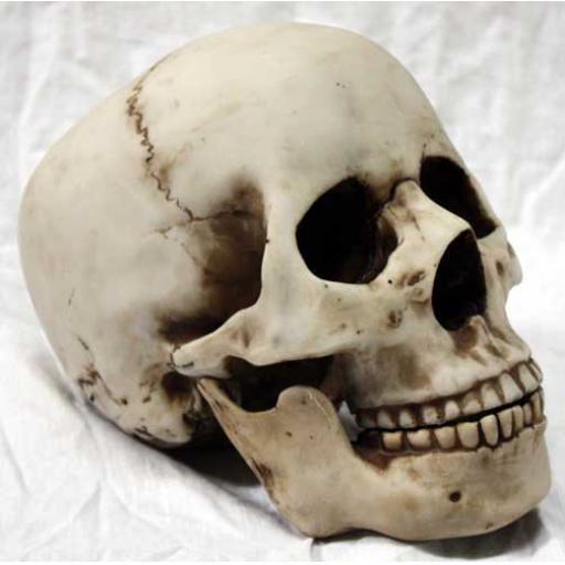 https://starbek-static.myshopblocks.com/images/tmp/nt_321_skull500b.jpg