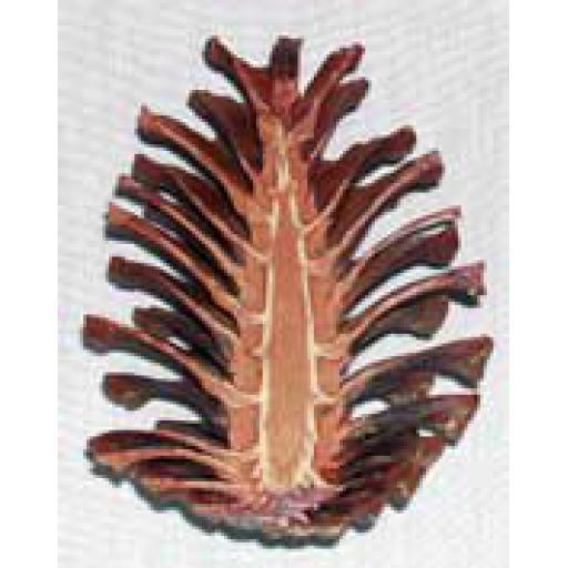 Cut Pine Cone
