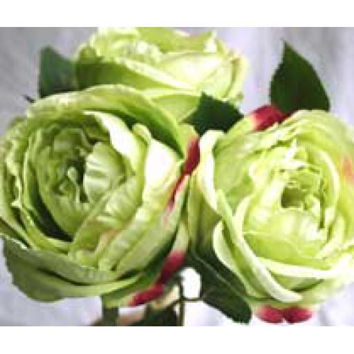 3 x Green Cabbage Rose