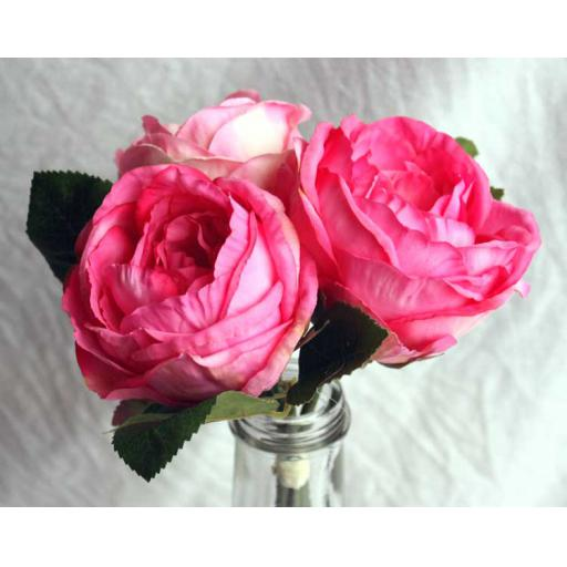 3 x Pink Cabbage Rose