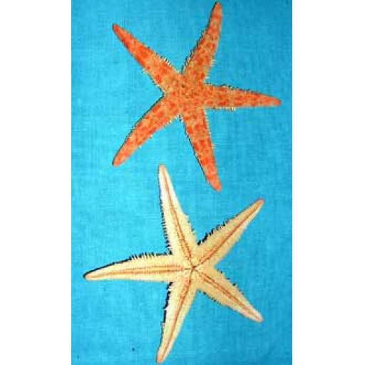 https://starbek-static.myshopblocks.com/images/tmp/se_115a_starfish2.8.jpg