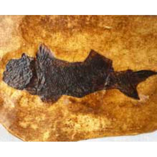 Large Fish Fossil Cast
