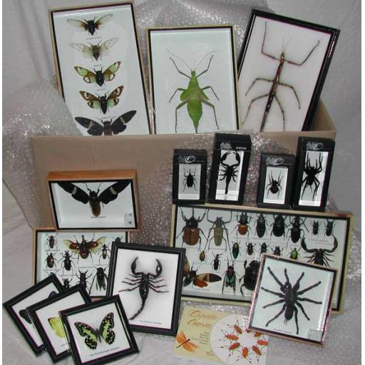 Insects Approval Box