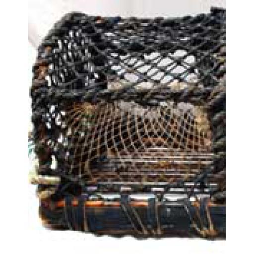 Large Lobster Pot