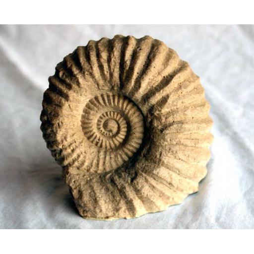 https://starbek-static.myshopblocks.com/images/tmp/fs_124_ammonite_750.jpg