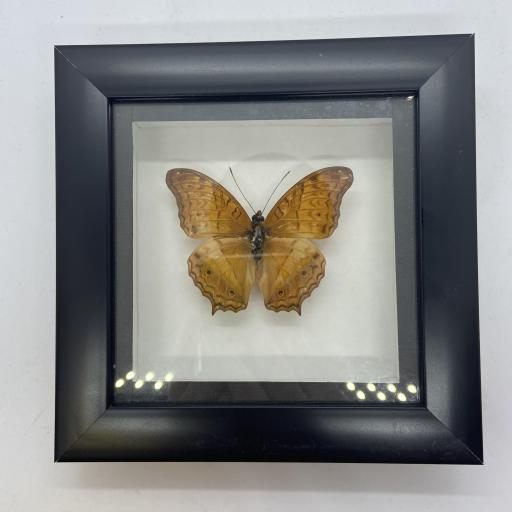 Framed Single Butterfly